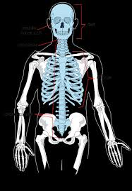 Hip injury Pain -skeleton