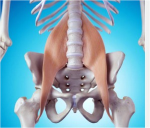 Hip Flexor Muscles in bowling - Skeleton with Hip Flexors Shown